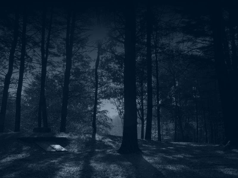 dark_forest_by_sonnenradbanner